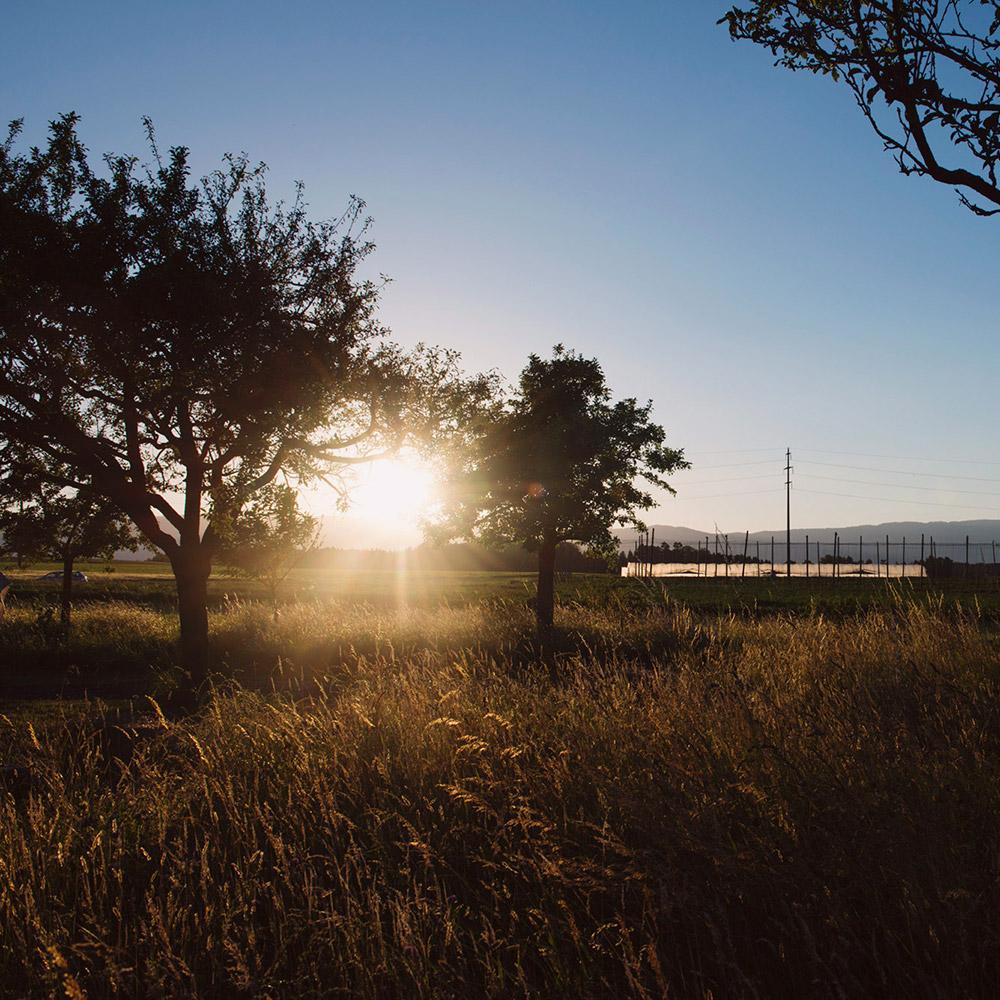 Le domaine au coucher du soleil