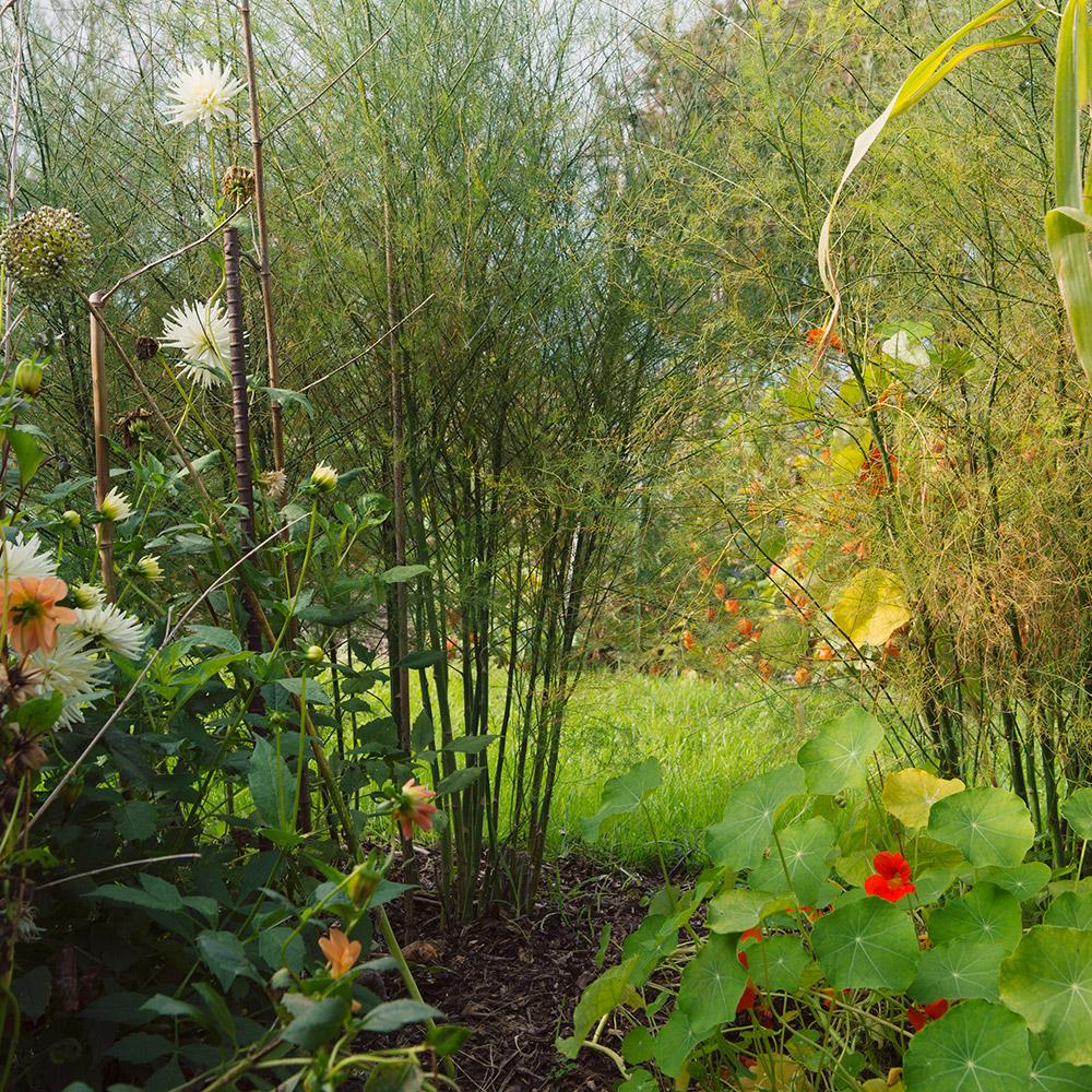 bluette_plantes